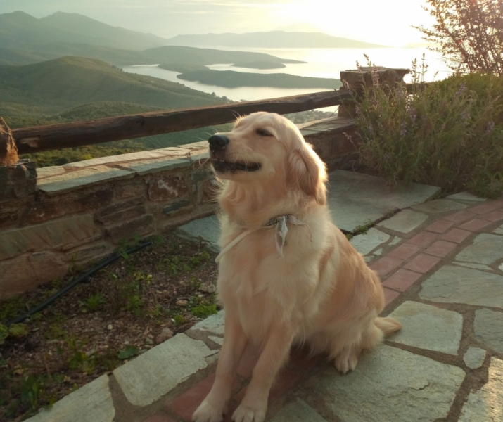 Pet friendly, Esperos Suites & Villas: Lafkos South Pelion Magnesia Greece